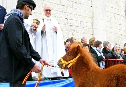 Bendiciendo a los animales durante San Antón