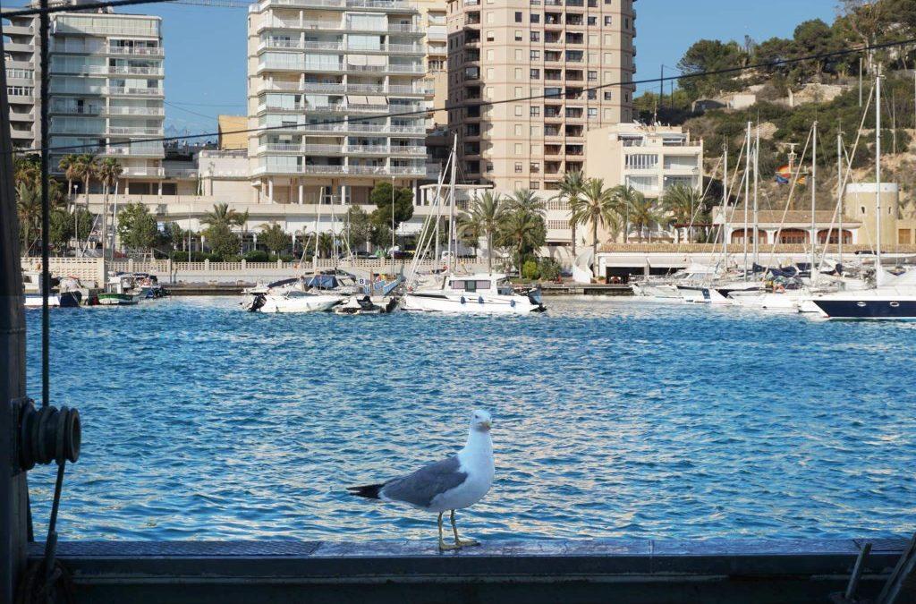 Foto de una gaviota en el puerto de Calp